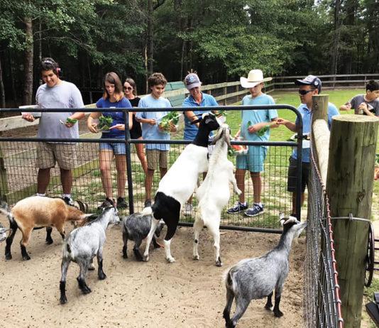 westonwood ranch goats